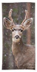 Snow Deer 1 Beach Towel
