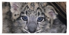 Beach Towel featuring the photograph Snow Leopard Cub Endangered by Dave Welling