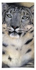 Beach Towel featuring the photograph Snow Leopard Portrait Endangered Species Wildlife Rescue by Dave Welling