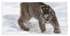 Snow-shovelling Lynx Beach Towel