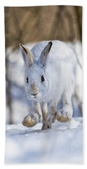 Snowshoe Hare Pictures 79 Beach Towel