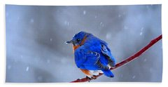 Snowy Bluebird Beach Sheet by Nava Thompson