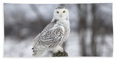 Snowy Owl Beach Sheet by Eunice Gibb