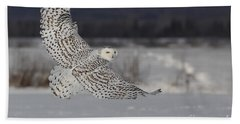 Snowy Owl In Flight Beach Towel by Mircea Costina Photography