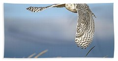 Snowy Owl Over The Dunes Beach Towel