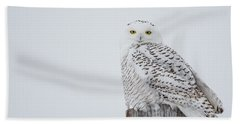 Snowy Owl Perfection Beach Towel