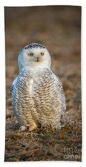 Snowy Owl Beach Towel