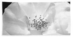 Soft Petal Rose In Black And White Beach Towel