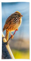 Song Sparrow Beach Towel by Bob Orsillo