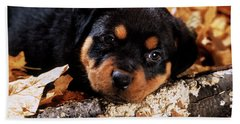 Sorrowful Rottweiler Puppy Lying Beach Towel