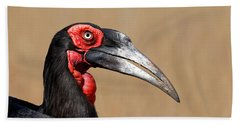Southern Ground Hornbill Portrait Side View Beach Towel