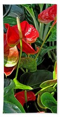 Beach Towel featuring the photograph Spathiphyllum Flowers Peace Lily by A Gurmankin