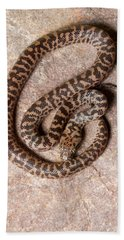 Spotted Python Antaresia Maculosa Top Beach Towel