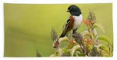 Beach Towel featuring the photograph Spotted Towhee by Ram Vasudev