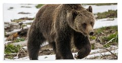 Beach Sheet featuring the photograph Spring Grizzly Bear by Jack Bell