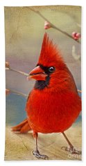 Spring Male Norther Cardinal Beach Sheet by Debbie Portwood