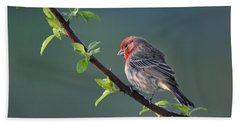 Song Bird In Spring Beach Sheet by Nava Thompson
