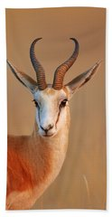 Springbok  Portrait Beach Towel