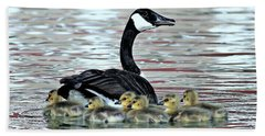 Spring's First Goslings Beach Towel