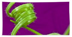 Beach Towel featuring the photograph Squash Tendril Macro by Sandra Foster