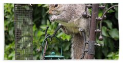 Squirrel Eating Nuts Beach Sheet