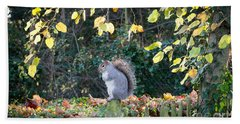Squirrel Perched Beach Towel by Matt Malloy