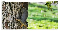 Squirrel With Pecan Beach Towel by Debbie Portwood
