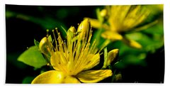 St John's Wort Beach Sheet