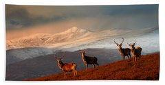 Stags At Strathglass Beach Towel