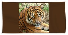 Staring Tiger Beach Towel