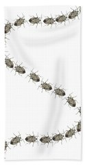 Stink Bugs I Phone Case Beach Sheet