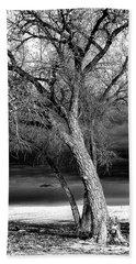 Storm Tree Beach Towel by Steven Reed