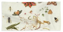 Study Of Insects And Flowers Beach Towel by Ferdinand van Kessel