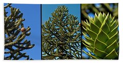 Study Of The Monkey Puzzle Tree Beach Towel