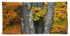 Sugar Maple In Autumn Beach Towel