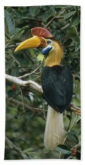 Sulawesi Red-knobbed Hornbill Male Beach Towel by Mark Jones