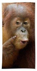 Sumatran Orangutan Baby Calling Beach Towel