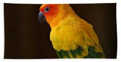 Sun Conure Parrot Beach Sheet