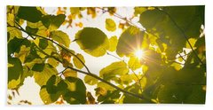 Beach Towel featuring the photograph Sun Shining Through Leaves by Chevy Fleet