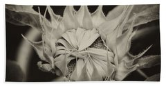 Beach Towel featuring the photograph Sunflower Grand Opening by Wilma  Birdwell