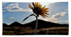 Sunflower In The Sun Beach Sheet by Matt Harang