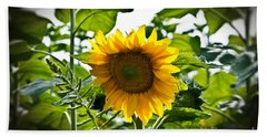 Sunflower Vignette Edges Beach Sheet