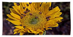 Sunflower With Ladybugs Beach Towel