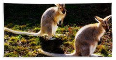 Swamp Wallabies Beach Towel by Miroslava Jurcik