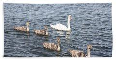 Swan And His Ducklings Beach Sheet by John Telfer