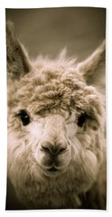 Sweet Alpaca Beach Towel by Shane Holsclaw