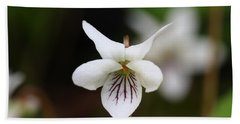 Beach Towel featuring the photograph Sweet White Violet by Daniel Reed