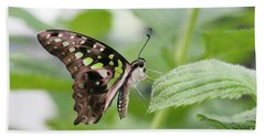 Tailed Jay Butterfly #3 Beach Towel
