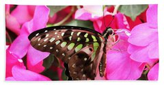 Tailed Jay Butterfly #4 Beach Sheet