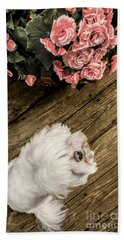 Havanese Puppy Beach Towel